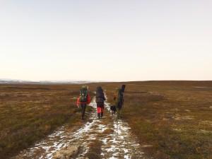 Høstjakt Vadsø (foto: Anna Solvoll Rognmo)